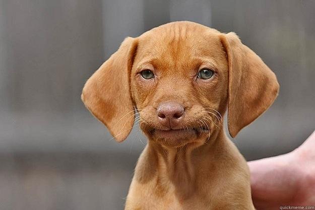 annoyed-dog